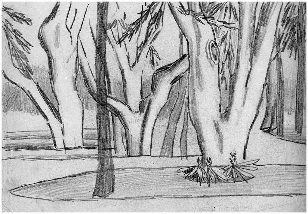 Alberi, 1, matita su carta, 1950, collezione privata