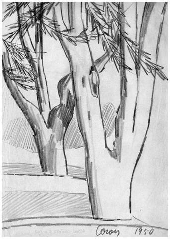 Alberi, 2, matita su carta, 1950, collezione privata